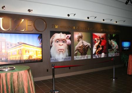 Muzeo wall